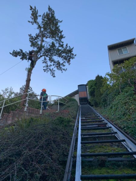 Before the Removal of a dying Evergreen Tree, this custom lakefront trolley track is NOT SAFE at the sound!