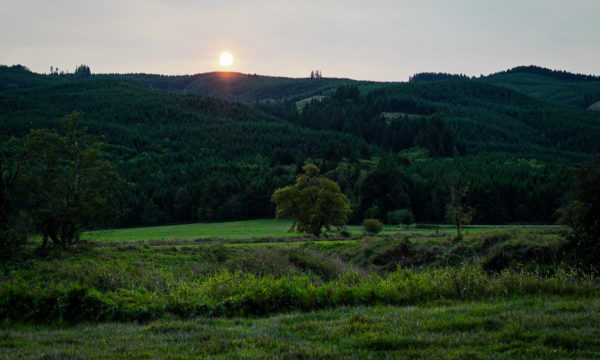 A Forest for the Trees is an image of tree, seperate from the forest of trees behind it. Sunshine beams over the wooded hill behind the tree alone in a field. It is late in the day and dark greens and blues cascade under the orange light of the sun.