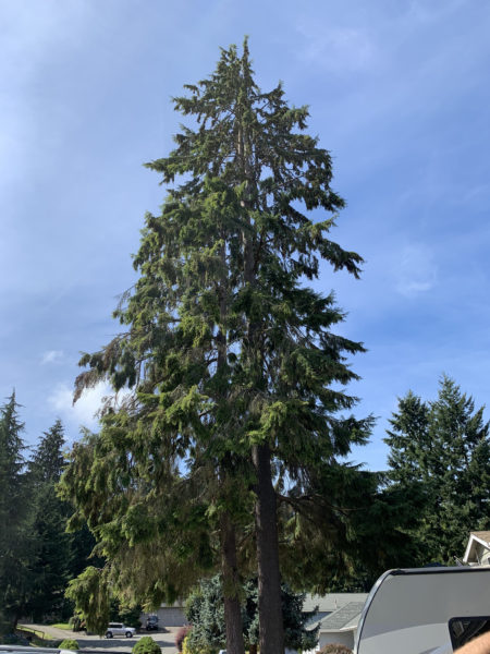 Large Hazardous Tree Removal, Before We Begin Removal