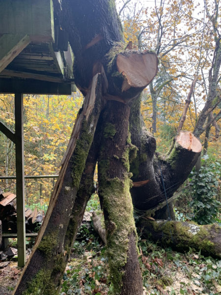 Hazardous Tree Removal Requires Proper Rigging to Prevent Further Damage